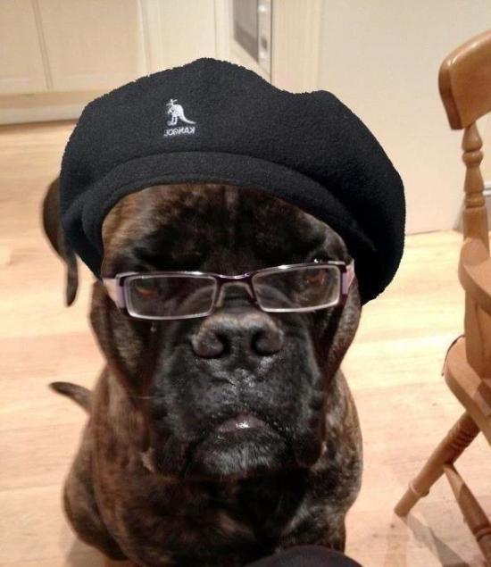 Samuel L Jackson's dog