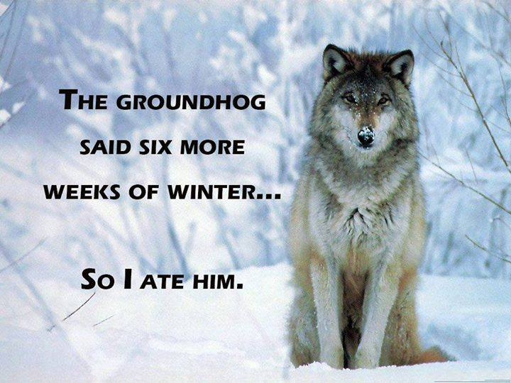 Groundhog Funny Comments