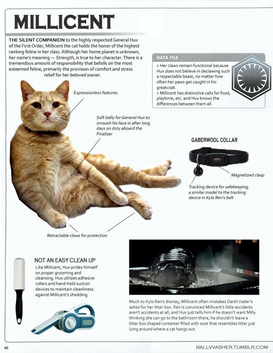 huxs-cat